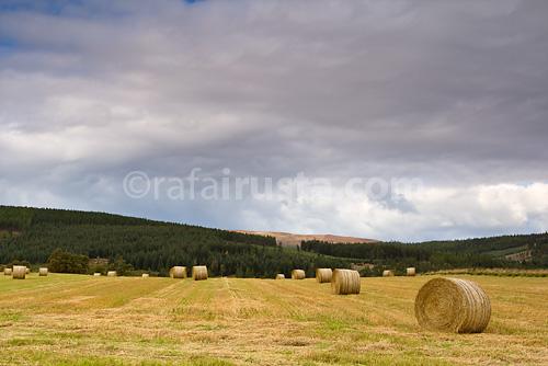 Escocia-dia_7-06